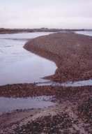 Shotley gravel bund in June 2000, Essex